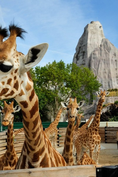 Atlantis Television - A Zoo in Paris.